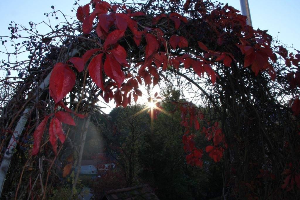 GER_Haus_im Herbst (9)
